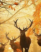 Forest animals.jpg wallpaper 1