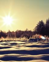 Sunny Snowy Day