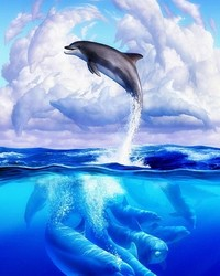 Dolphins Double.jpg
