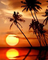 Sunset In Tropical Paradise