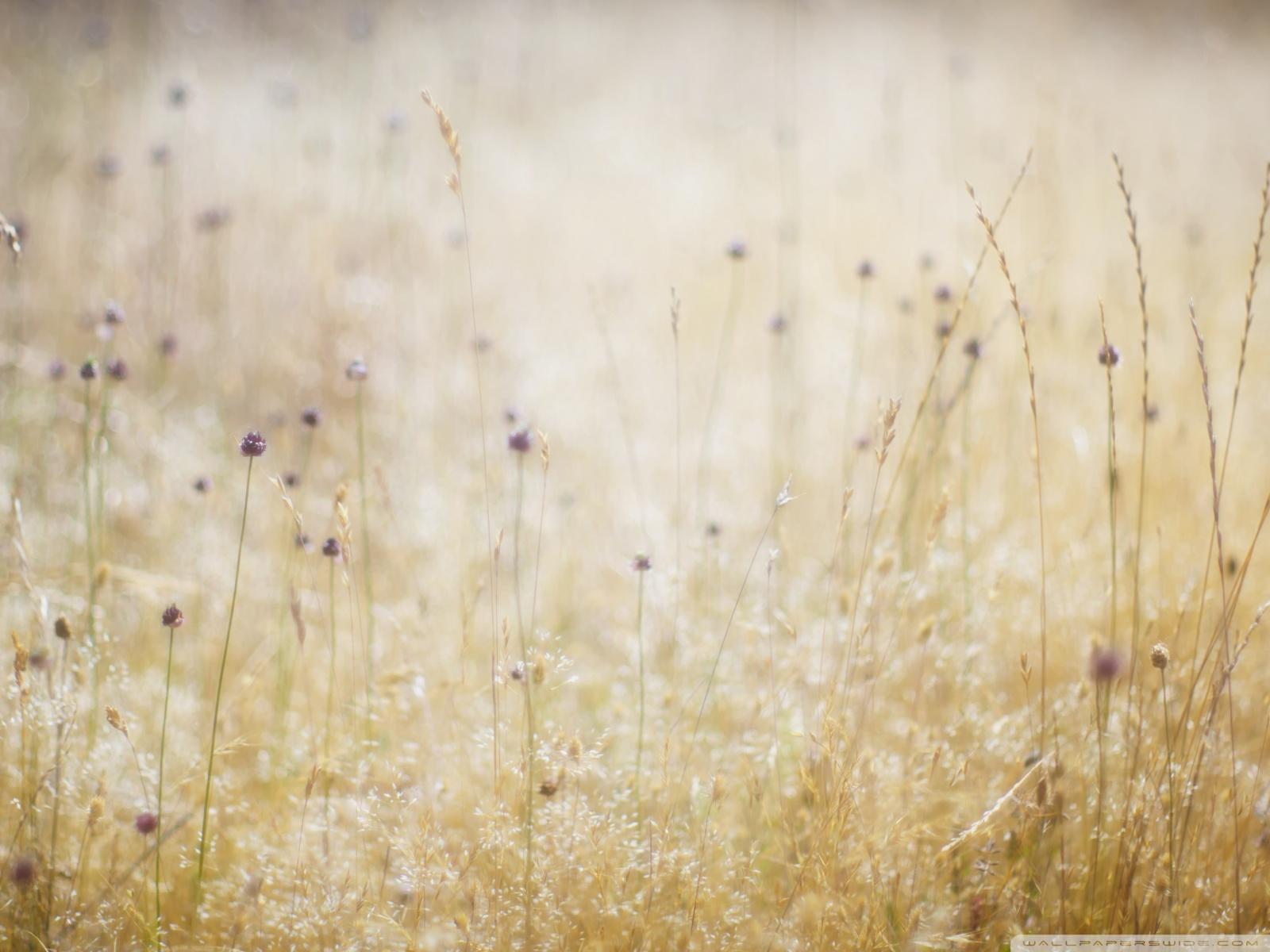 Free Field Of Wildflowers phone wallpaper by lilmunkey2233