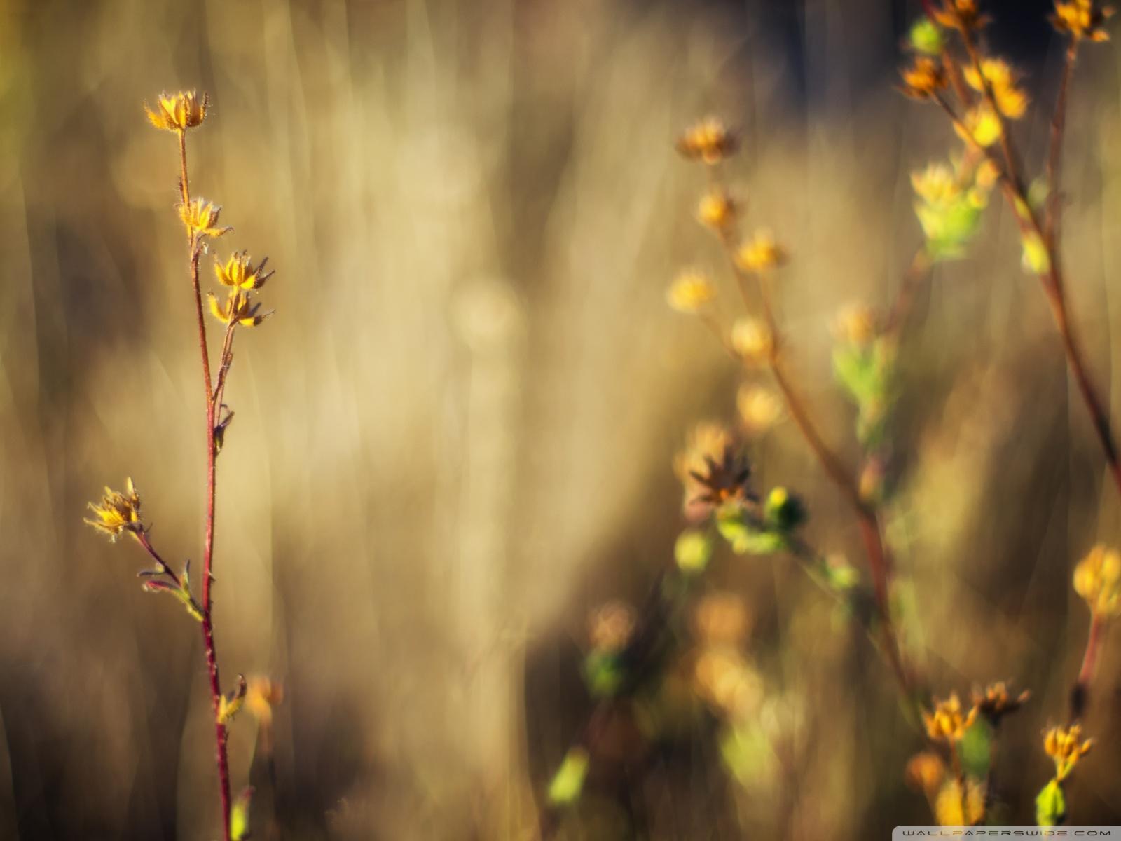 Free Autumn Focus phone wallpaper by matt_kerchner