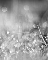 Grass Bokeh Black and White