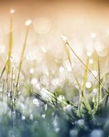 Grass Dew Bokeh Close up