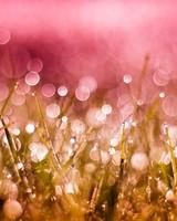 Grass Drops and Bokeh