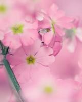 Tiny Pink Flowers wallpaper 1