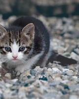 Kitten wallpaper 1