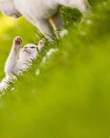 Cute White Cats