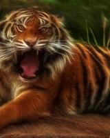 Embo Tiger