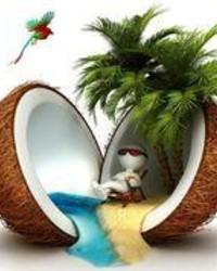 coconu.jpg