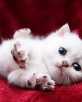 Kitten Begging Cutely