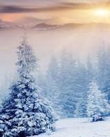 Winter wallpaper 1
