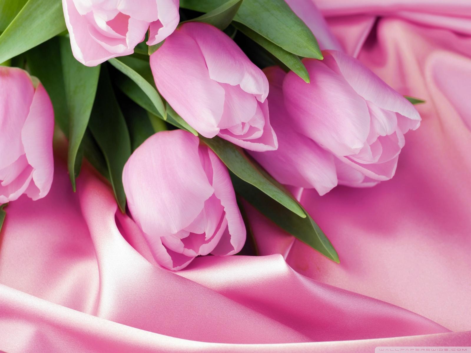 Free Romantic Tulips phone wallpaper by erica67