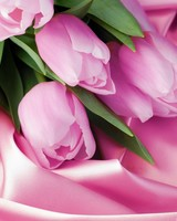 Romantic Tulips wallpaper 1