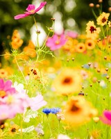 Vivid Flowers