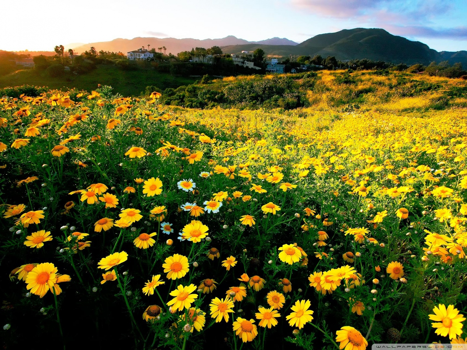 Free Spring comes early to southern California phone wallpaper by arabanian