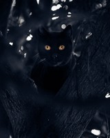 Black Cat Perched in a Tree