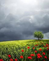 Tree, Summer Storm