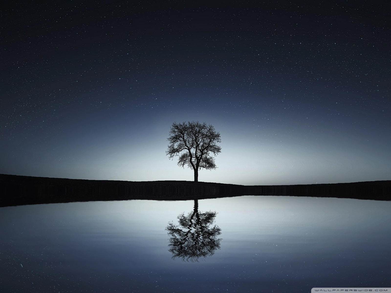 Free Bare Tree, Winter Night phone wallpaper by moonbunni87