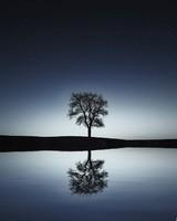 Bare Tree, Winter Night wallpaper 1