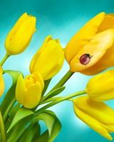 Ladybird and Yellow Tulips