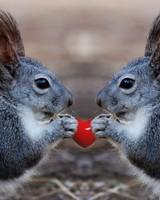 Squirrels Love