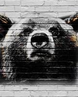 Bear - Concrete Wall