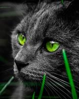 Green Cat Eyes in the Dark