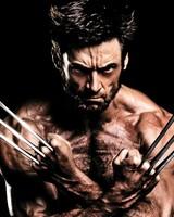 Wolverine Show-off