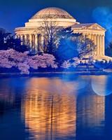Thomas Jefferson Memorial Cherry Blossom