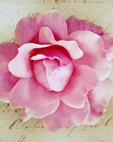 Pink Rose Vintage
