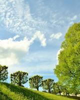 Spring Landscape Nature