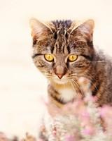Spring, Cat