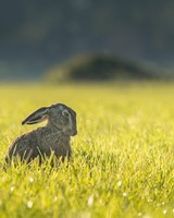 Funny Hare