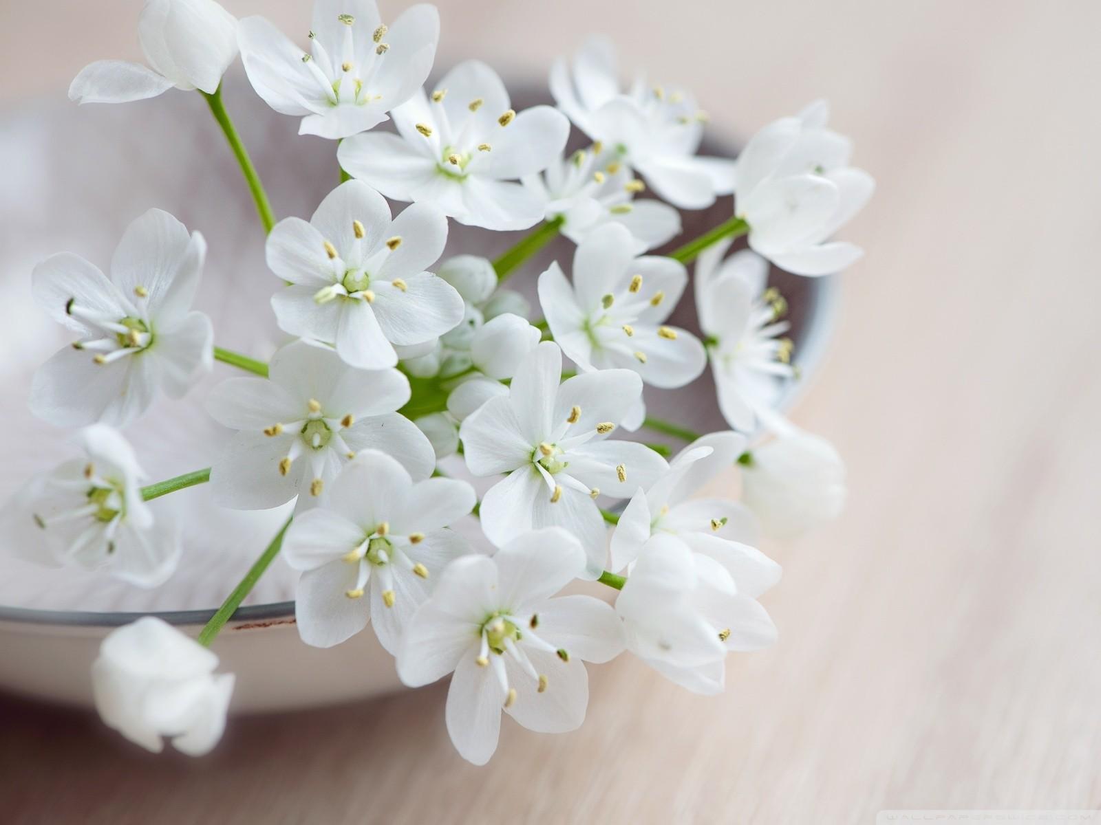 Free Spring Flowers Macro phone wallpaper by savannah41599
