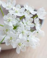 Spring Flowers Macro wallpaper 1