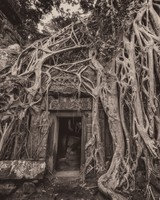 Cambodia Temple Tree Roots
