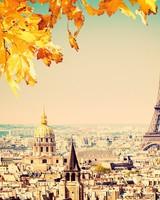 Paris - Autumn tree