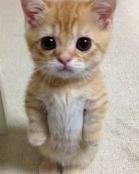 lil kitty.jpg