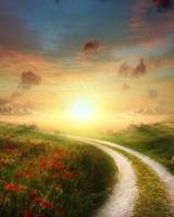 Sun Poppy Path Landscape