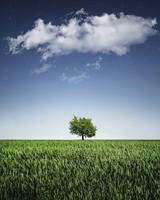 Green Tree Alone