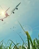 Aircraft Fields Sun Sky