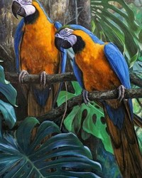 Animals - Blue and Gold Macaws