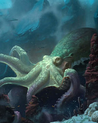 Animals - Octopus wallpaper 1