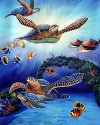 Animals - Sea Turtles - The Great Barrier Reef