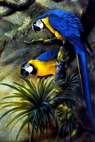 Free Animals - Blue and Gold Macaws phone wallpaper by epictones