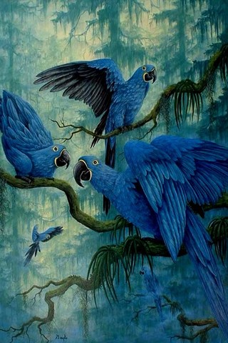 Free Animals - Hyacinth Macaw phone wallpaper by epictones