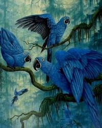 Animals - Hyacinth Macaw wallpaper 1