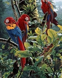 Animals - Scarlet Macaws
