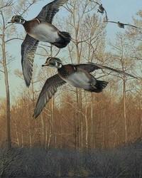 Animals - Early morning Flight - Mallard Ducks